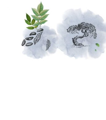 Formuoti augalai
