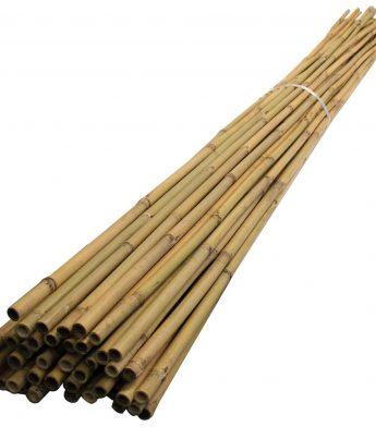 Kuolai, bambukai
